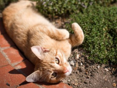Problem: Your cat keeps digging up the plants in the garden.