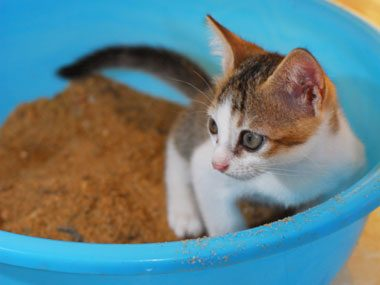 Problem: Your cat avoids the litter box.