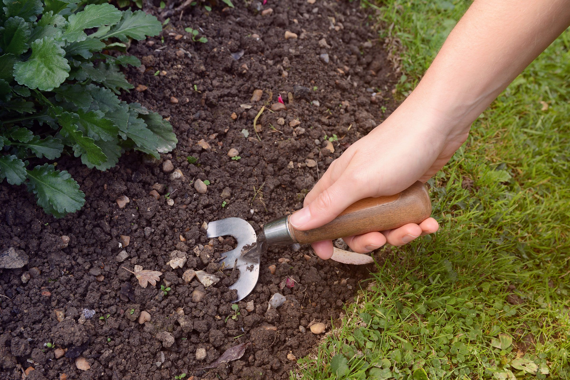 you can send a sample of your soil to a local agricultural agency to have it tested - Garden Dirt