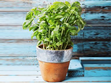 By late summer, there's probably more basil growing in your garden (or going cheap at the farmers' market) than you could ever stuff into a caprese salad.