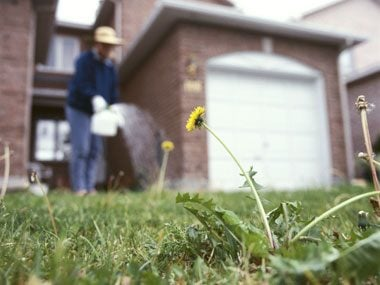 Green Weed-Free Lawn: The problems