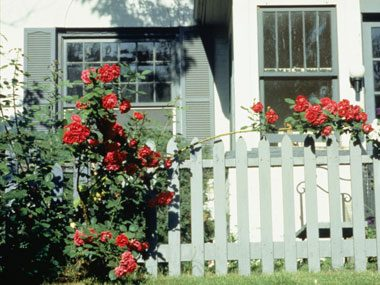 safety strategies, rose bush