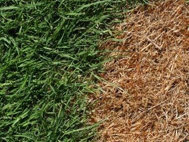 Problem: Lawn has brown spots or weblike threads.
