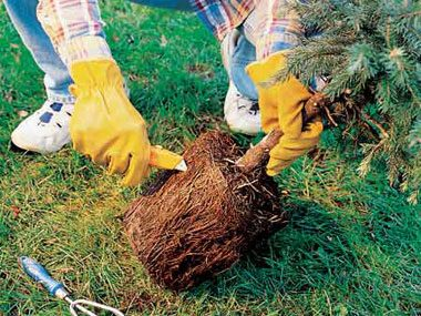 Assist Your Root Bound Plants.
