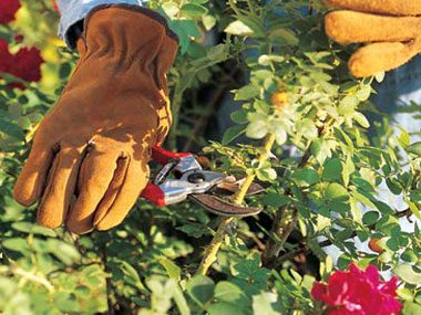 easier gardening, pruning roses