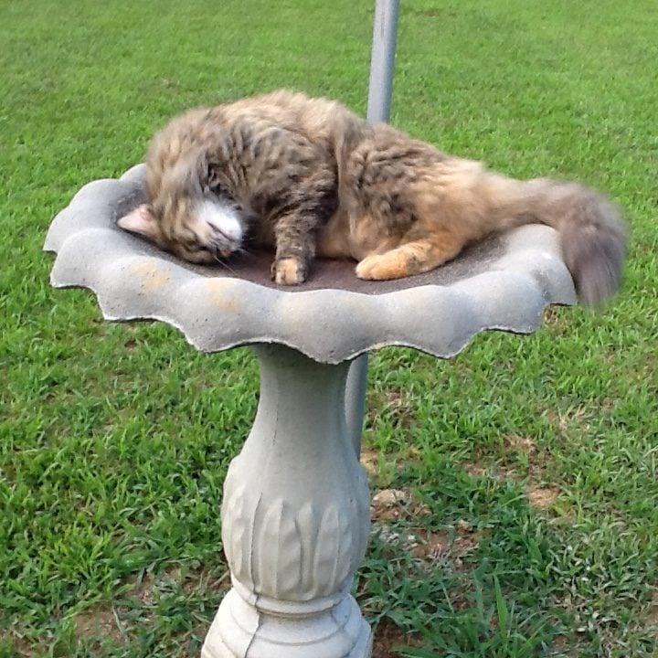 Cat sleeping in an empty birdbath