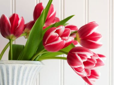 more florist secrets, tulips