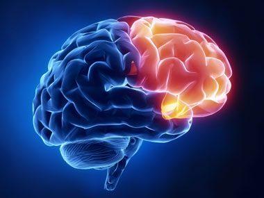 brain secrets, frontal lobe