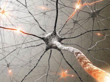 brain secrets, neurons