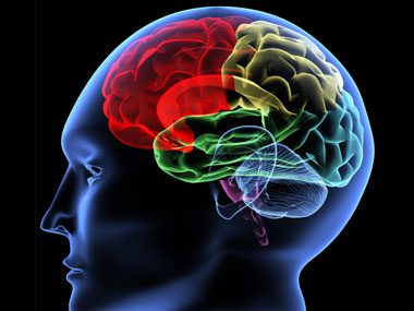 brain secrets, regions