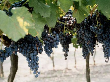 2. Choose lesser-known grape varietals.