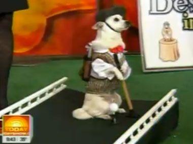 5. The golfing dog