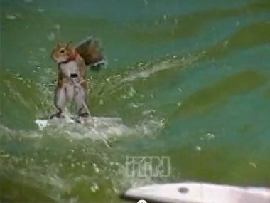 1. The waterskiing squirrel