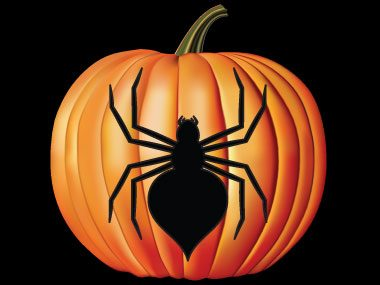 pumpkin carving stencils, spider