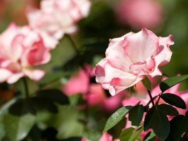You can fertilize your plants!