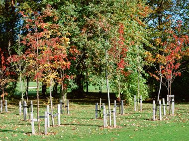 clothespin tricks, saplings