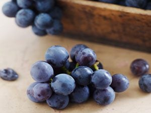 The Juicy Truth About Concord Grapes