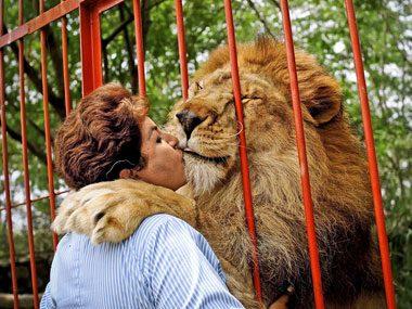 Hero Pets: A Lion's Big Heart