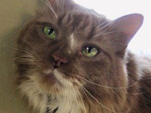 Hero Pets: Pudding the Cat's Life-Saving Sense