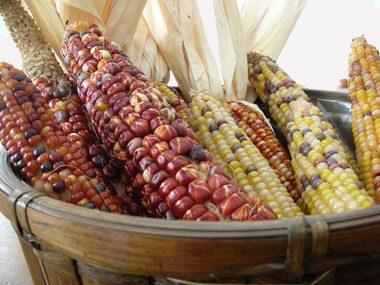 make a fall centerpiece, Indian corn