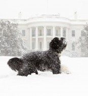 White House Holiday: Let Bo Be Your Guide