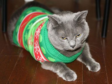 Ugly Christmas Kitty Sweater
