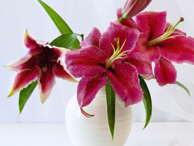 flowers for Valentine's Day, lilies