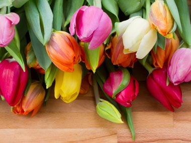 flowers for Valentine's Day, tulips