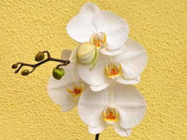 flowers for Valentine's Day, orchids