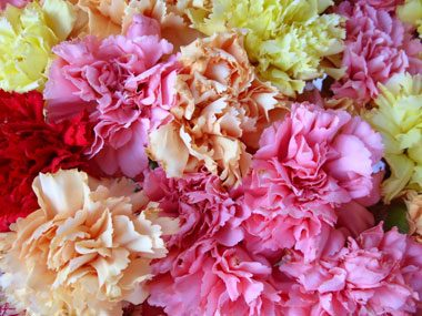 flowers for Valentine's Day, carnations