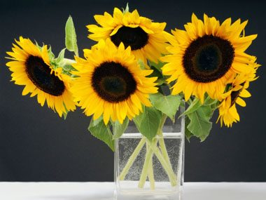 flowers for Valentine's Day, sunflowers