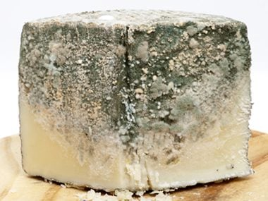 You can keep your cheese from going moldy.