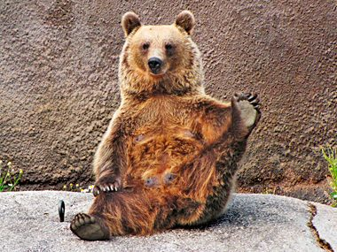 Bear Does Yoga