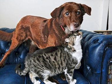 Cat Guides Blind Dog
