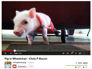 03-chris-bacon-disabled-pets-sl