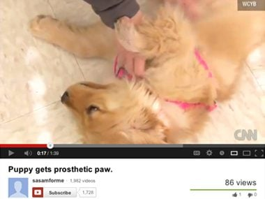 A new paw for Lily the Golden Retriever