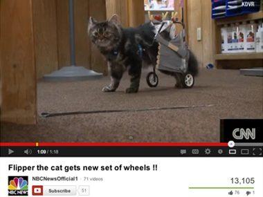 Bionics for Flipper the kitten