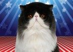 Photo Illustration of Morris the cat