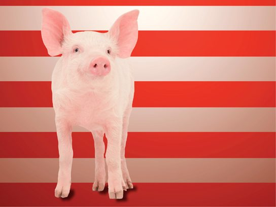 Pigasus for President of the United States
