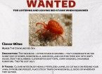 Clover mite wanted poster