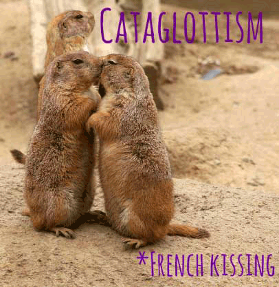 cataglottism weird word prairie dogs