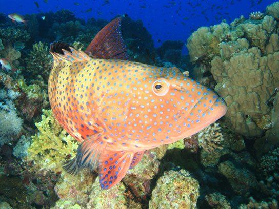 Asia's Live Reef Fish Trade. Price Tag: $1 Billion