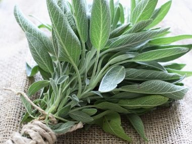 Can a Canker Sore: Ground Sage