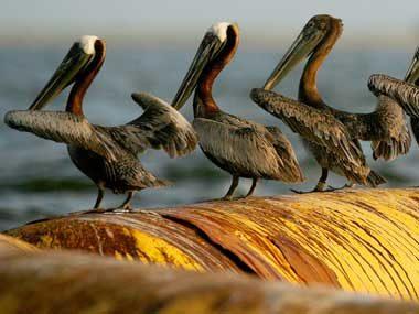 Restore the Gulf of Mexico. Price Tag: $1 Billion Minimum