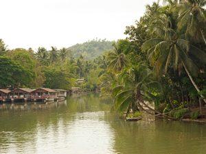 Philippine jungle