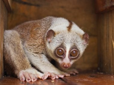 10 Scary Facts Behind the World's Most Adorable Animals