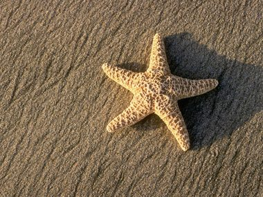 Starfish have ghoulish eating habits