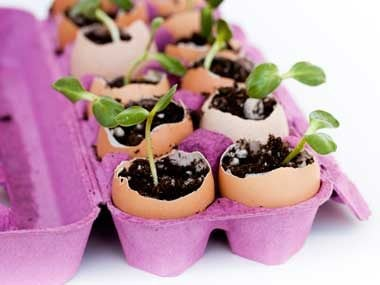 Use egg cartons or eggshells in the garden to start seeds.