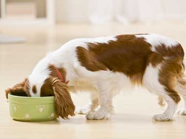 Use eggshells to fortify pet food.