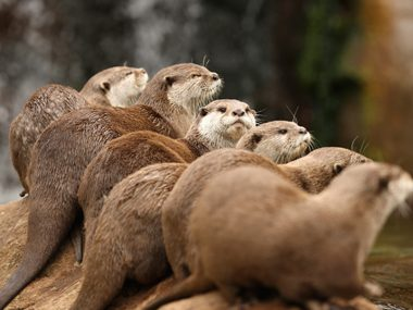 A Raft of Otters